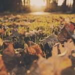 foliage madonna di campiglio